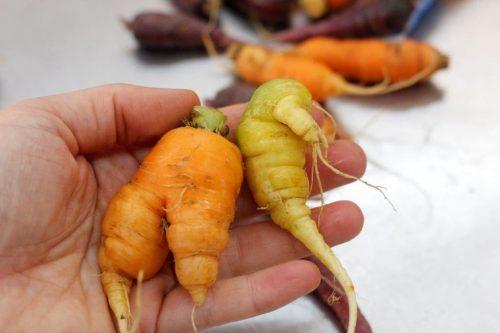 ugly vegetable